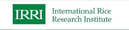 আন্তর্জাতিক ধান গবেষণা ইনস্টিটিউটে চাকরির সুযোগ