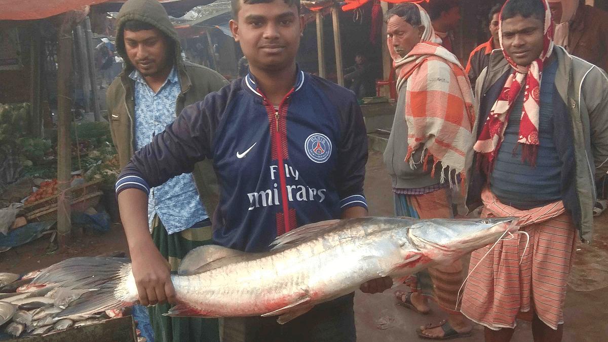 নাটোরের লালপুরে পদ্মায় ধরা পড়ে ১১ কেজি ওজনের একটি আইড় মাছ