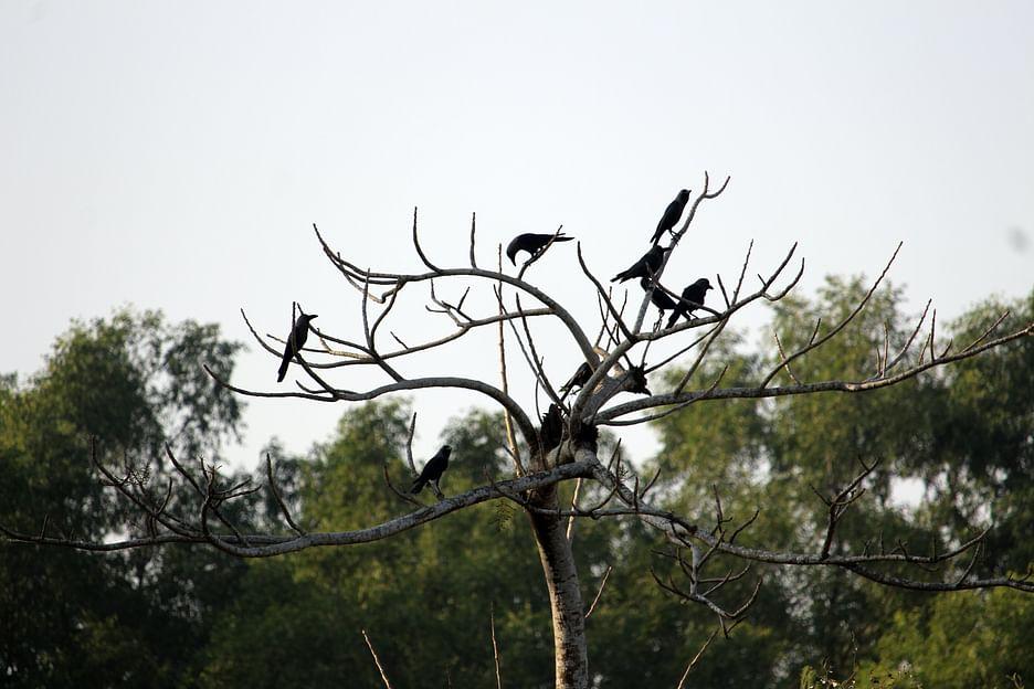 এখানকার বনে দেখা মিলতে পারে কেশরওয়ালা কুকুর, হরিণ আর হরেক পাখির
