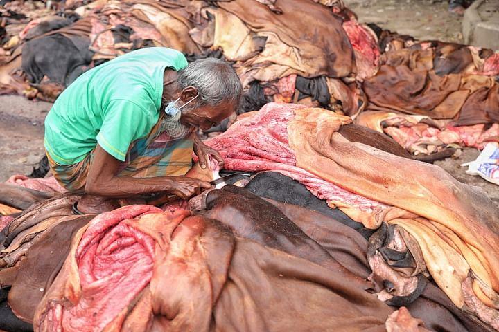 চামড়া সংগ্রহে ব্যস্ত মৌসুমি চামড়া ব্যবসায়ীরা। কলাবাগান, ঢাকা, ২১ জুলাই।