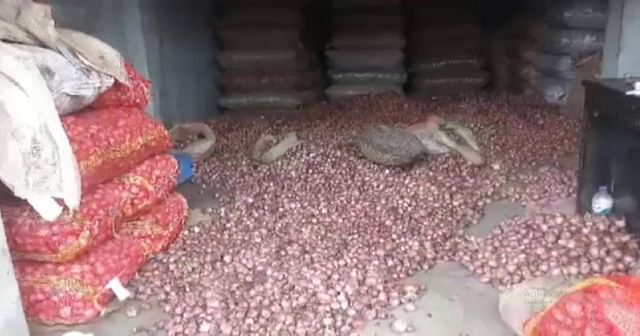 Rotten onions arrive from India