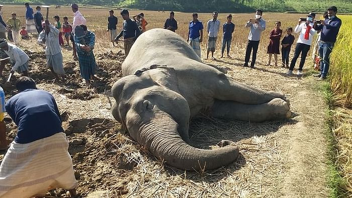 A dead elephant was rescued from Ghona in the hilly area of Chakfirani village in Lohagara upazila of Chattogram