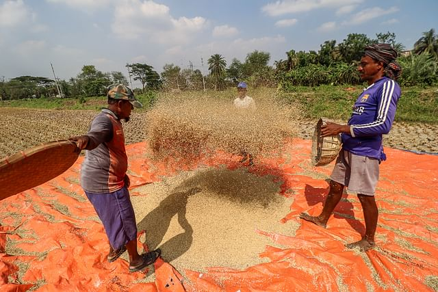 Two men winnow paddy in Beel Pabla area of Dumuria upazila in Khulna on 6 May 2021.